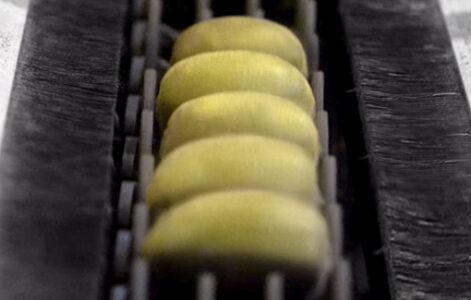 kiwi processing machine