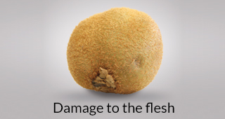 Kiwi defect: damage to the flesh