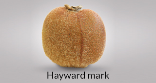 Kiwi defect: Hayward mark