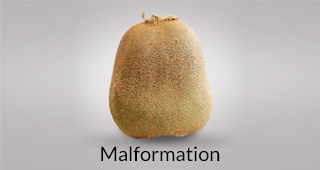 Kiwi defect: malformation