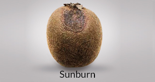 Kiwi defect: sunburn