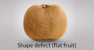 Kiwi defect: shape defect (flat fruit)