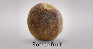 Kiwi defect: rotten fruit