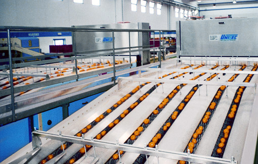 Machines and lines for grading, sorting and processing fruit