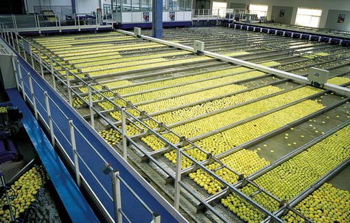 Unitec lines for sorting and grading Fruit