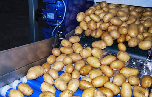 Potatoes processing machine