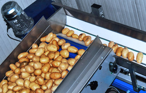 Potatoes sorting machine