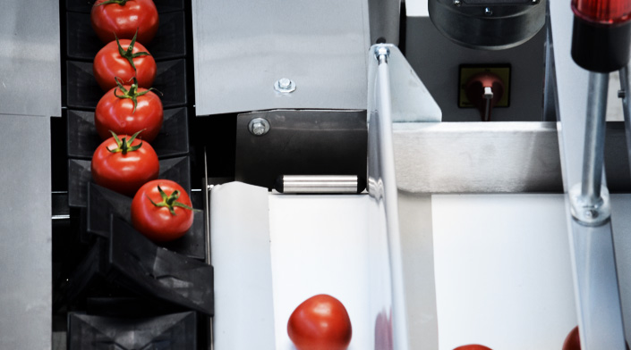 Grading and Sorting Machines and Lines for Tomatoes, Processing Plants and Equipment